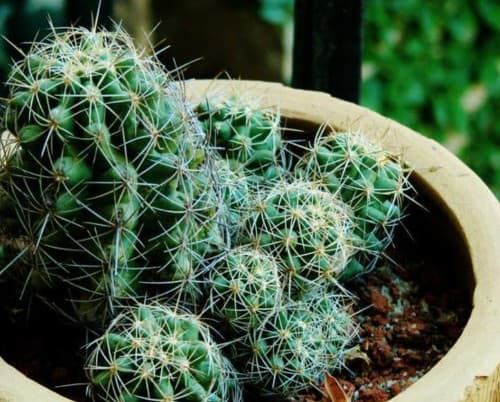 cacti photo6 1