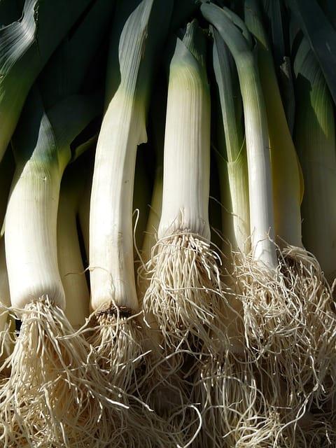 1 Leeks extend your growing season