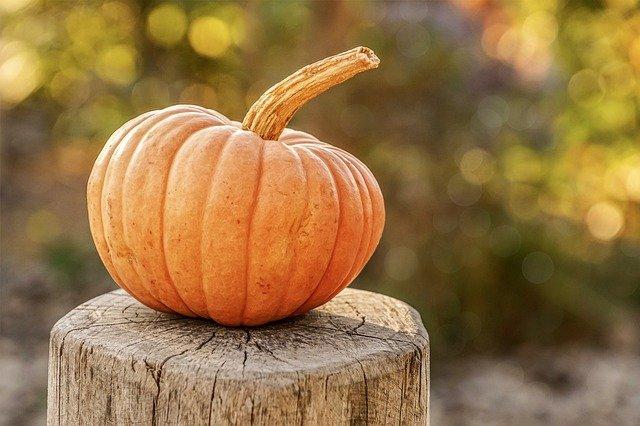 1 Pumpkin on Stump