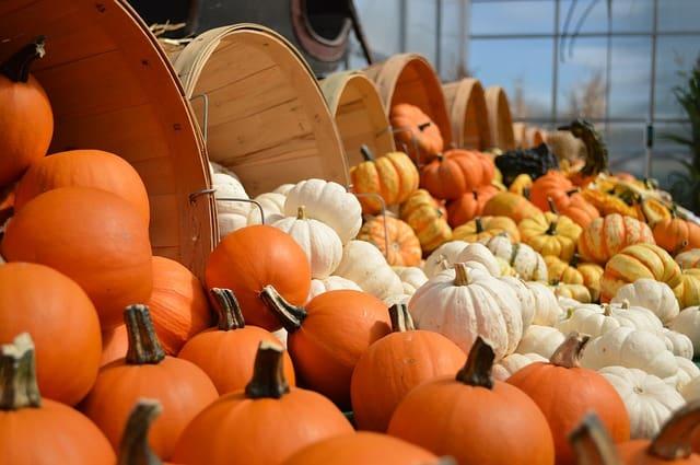 10 Pumpkin Display