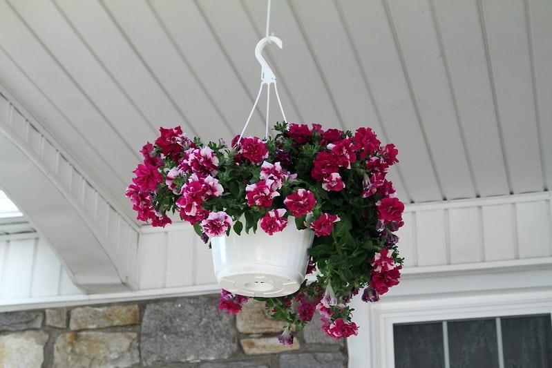 18 Bright Hanging Basket