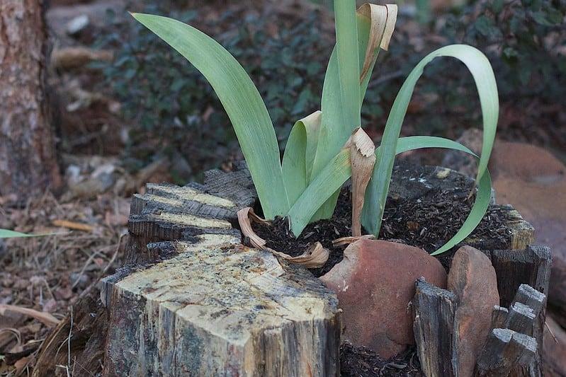 21 Tree Stump Planter