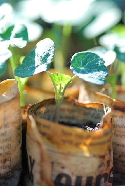 3 Easy to grow from seed