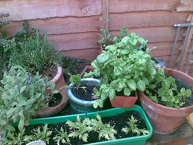 33 Patio Vegetable Garden