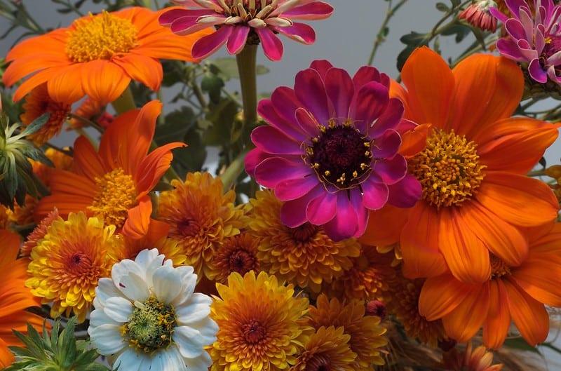 35 Bright Fall Flowers