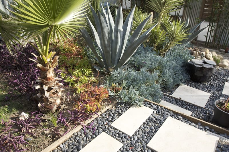 36 Xeriscape Landscaping