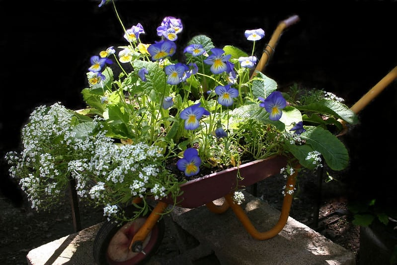 38 Wheelbarrow Planters