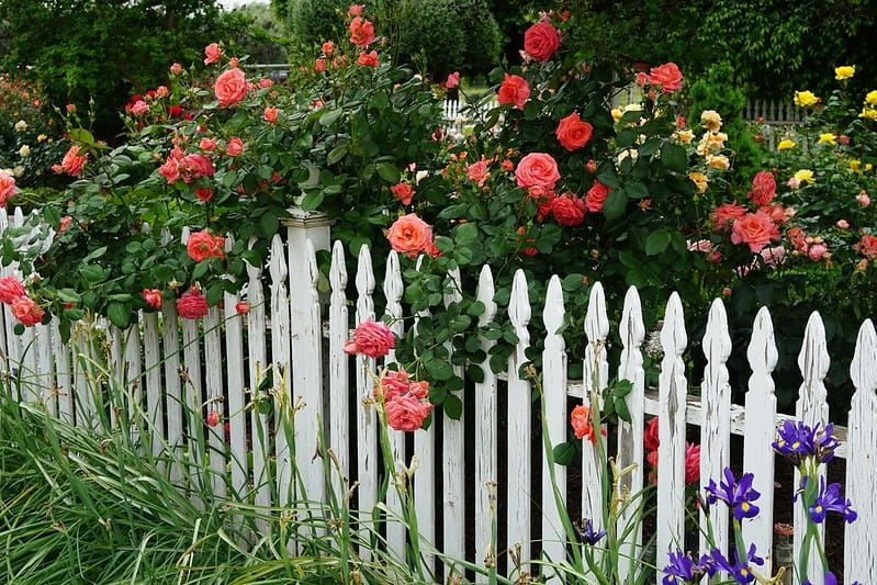 39 White Picket Fence with Flowers