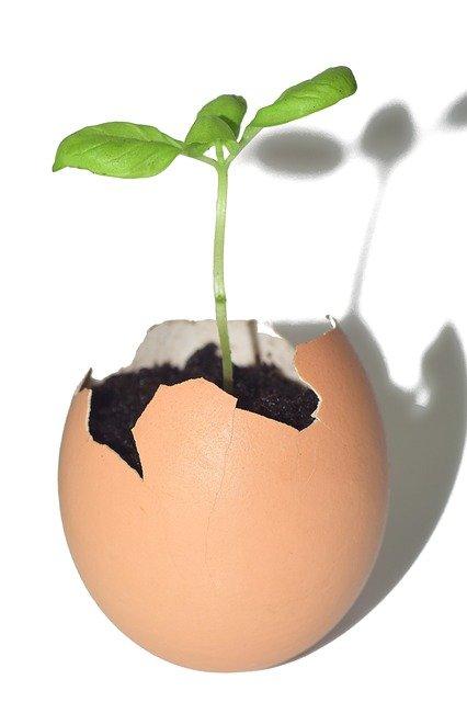 4 Eggshells have many benefits