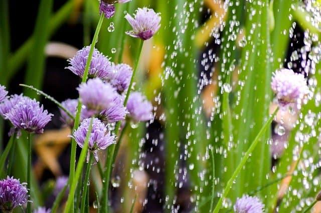4 Keep soil evenly moist