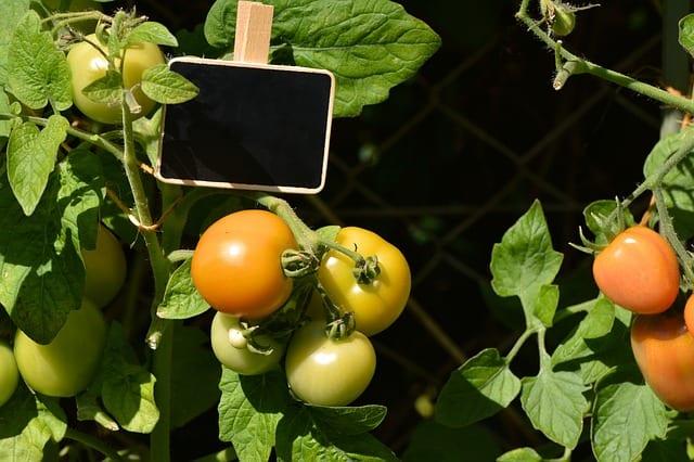 4 Ripening green fruit reduces waste