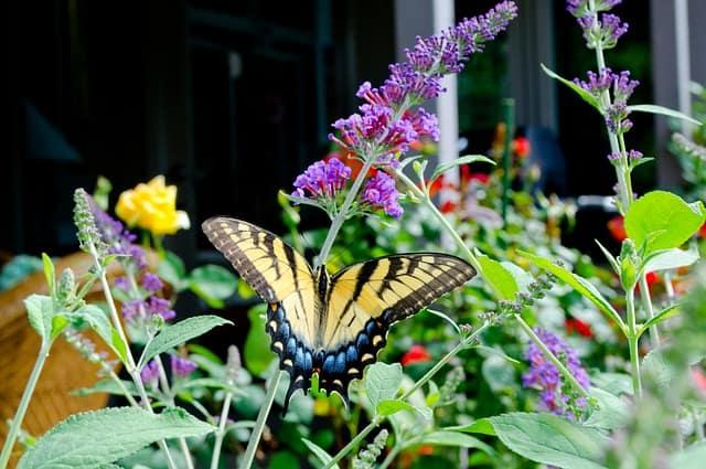 5 Companion planting draws pollinators