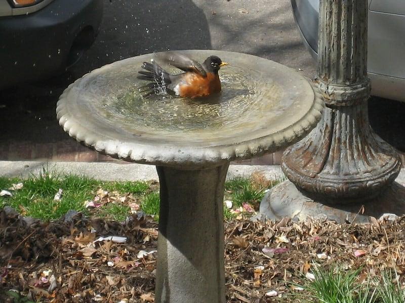 6 Small Birdbath