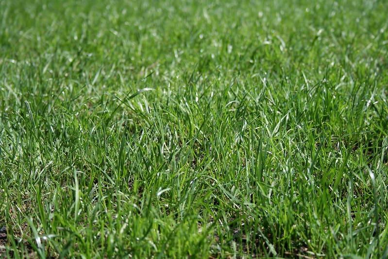 7 New Grass