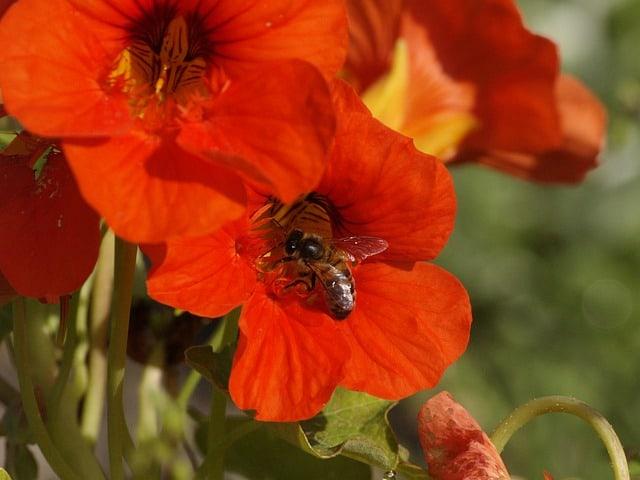 7 Popular with gardeners and pollinators