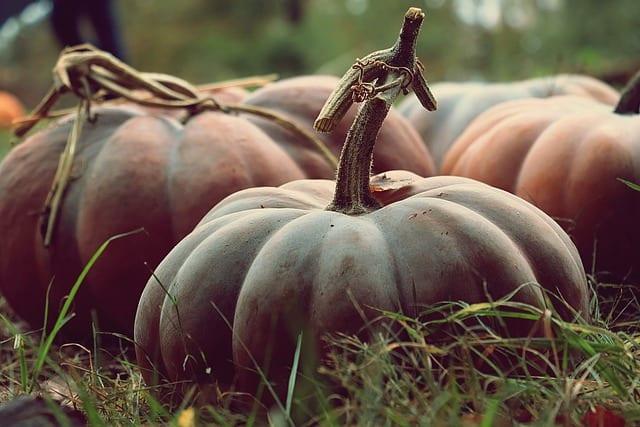 9 Large Pumpkins