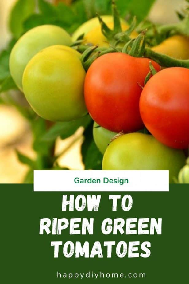 How to Ripen Green Tomatoes 1
