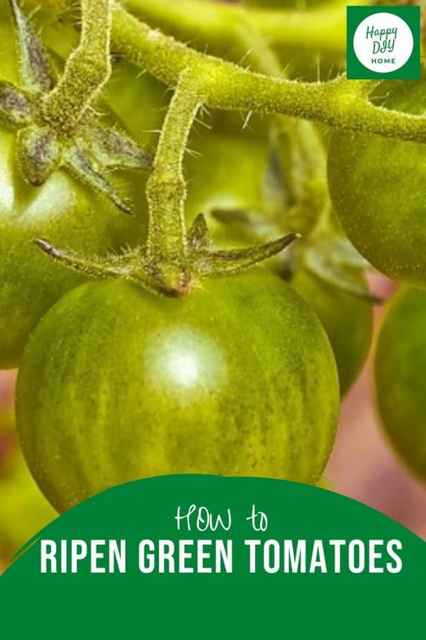 How to Ripen Green Tomatoes 2