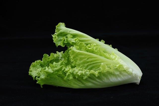 1 Crisp green romaine lettuce leaves