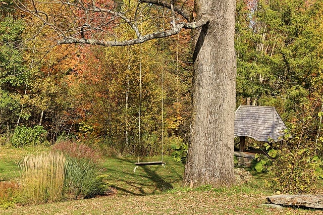 1 Fall gardens can look dull