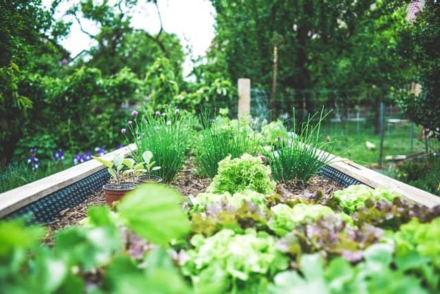 1 Garden Bed