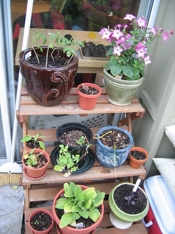 1 Outside Plant Stand