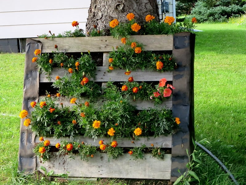 1 Plant Wall Pallet