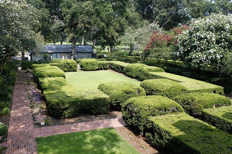 10 Boxwood Living Hedge