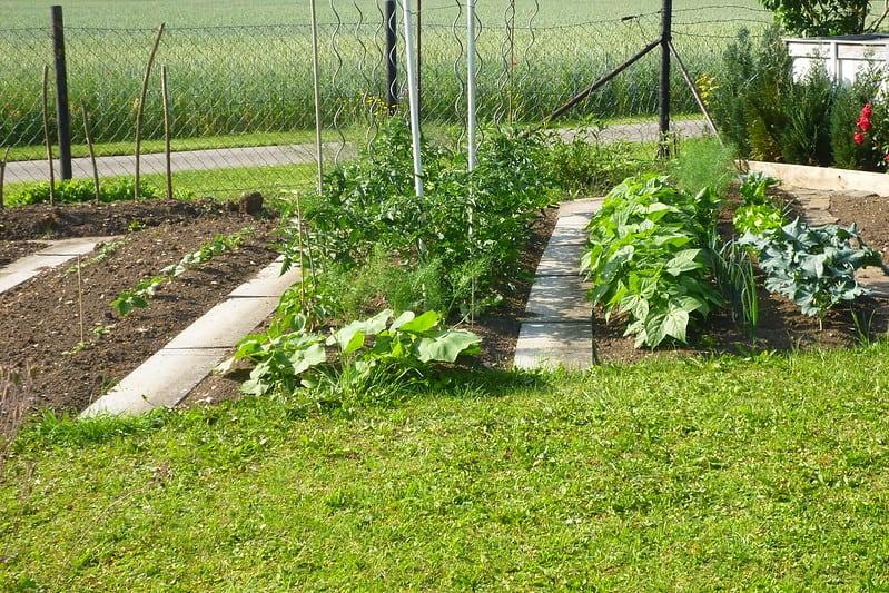 10 Edible Garden