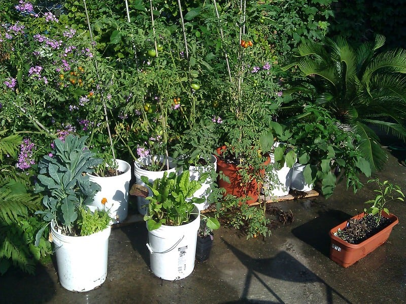 11 Container Garden