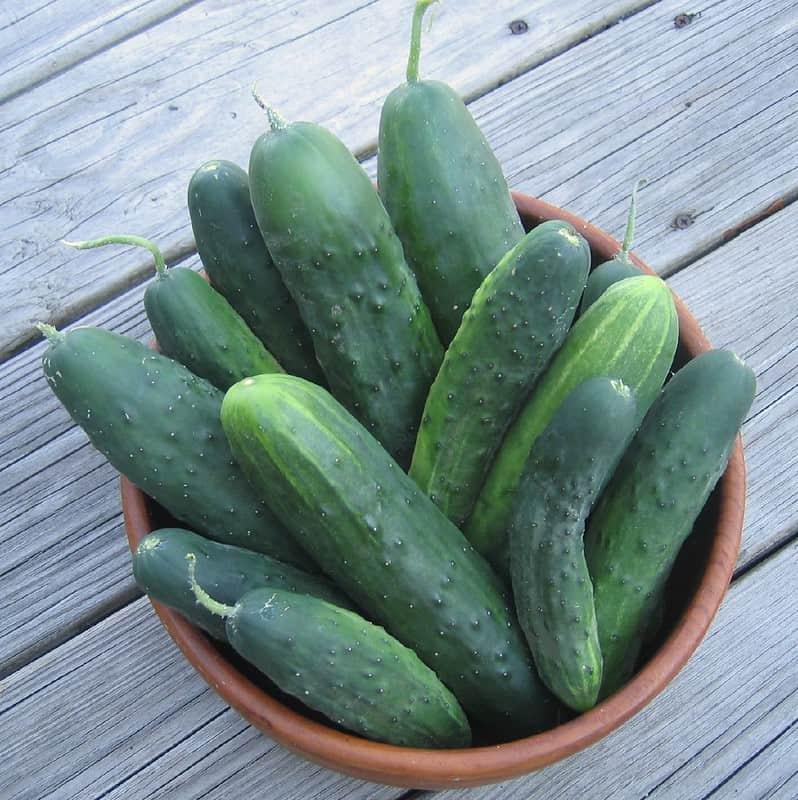 13 Marketer Cucumbers 1