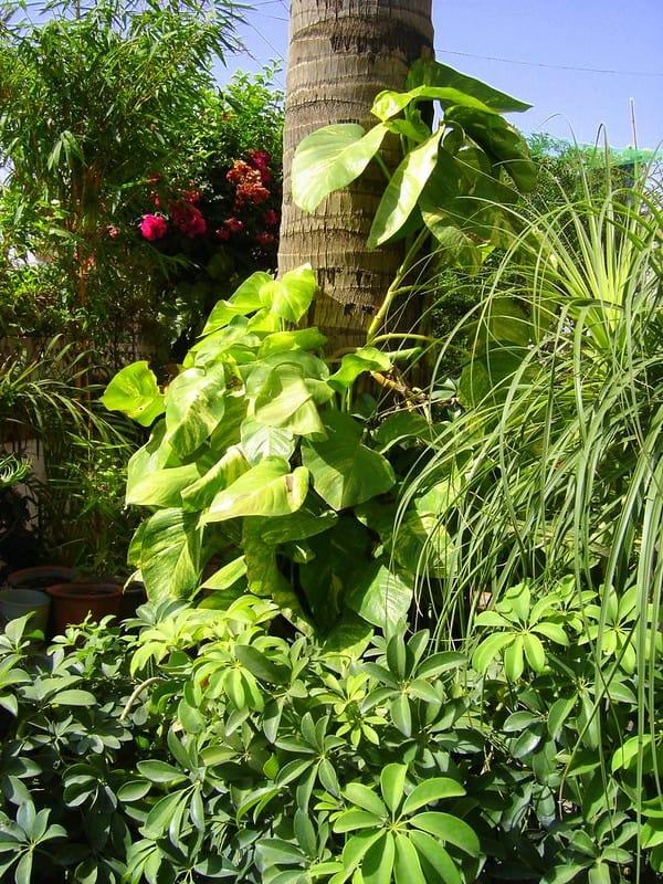 15 Global Green Pothos