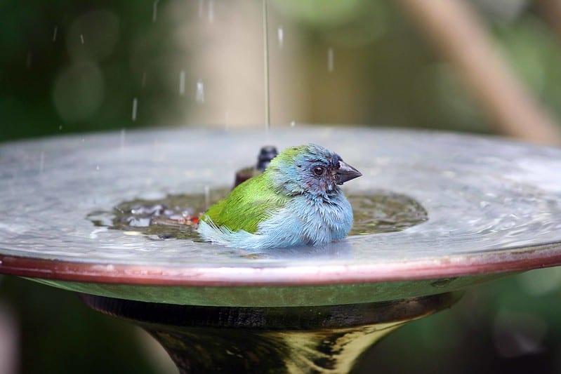 16 Birdbath
