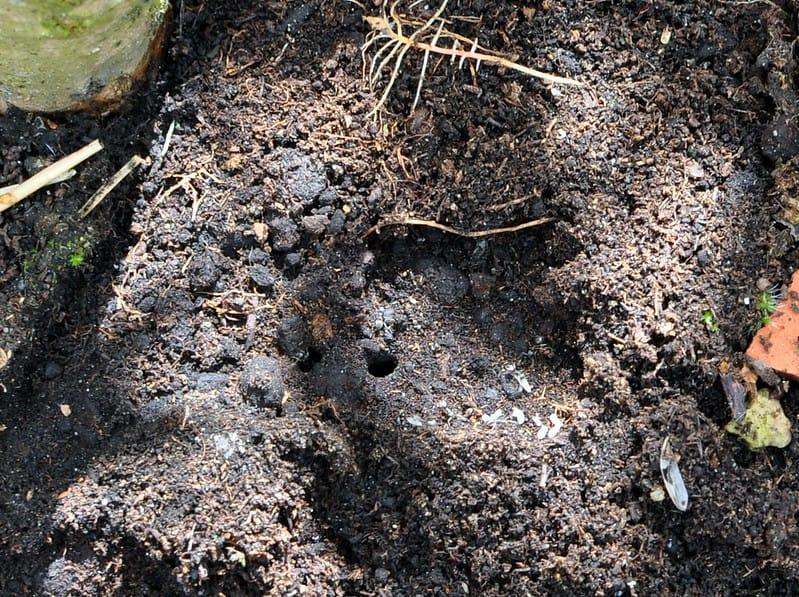 16 Potting Soil