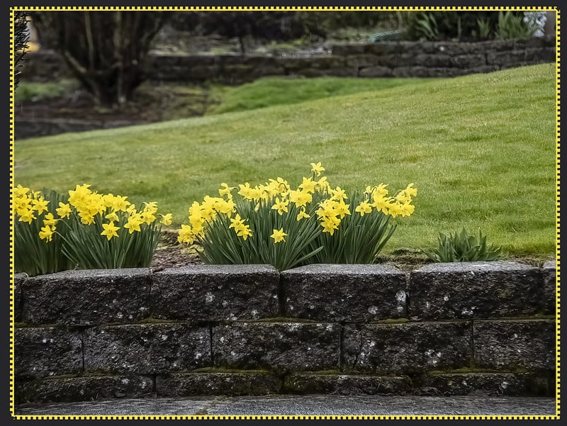 17 Flowers on Top of Retaining Wall