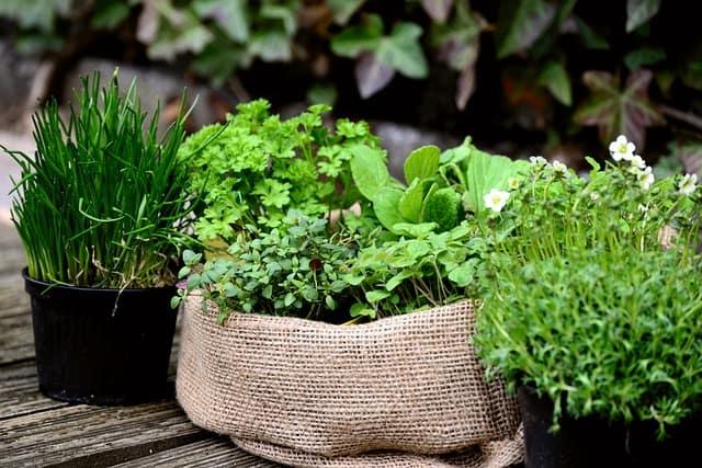 17 Herb Garden