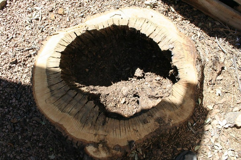 17 Stump Planter