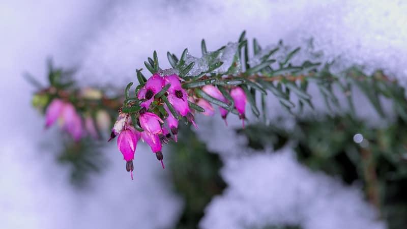 17 Winter Heath