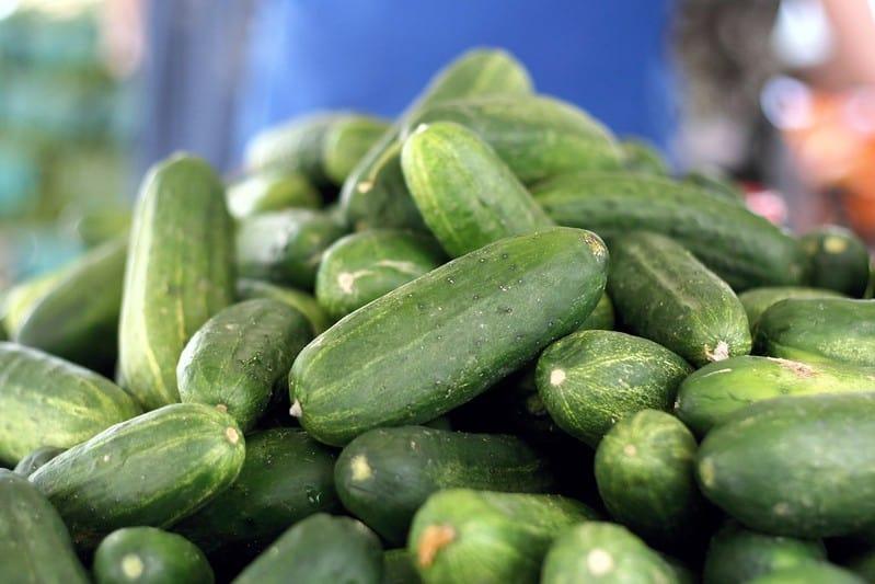19 Sweet Success Cucumber 1
