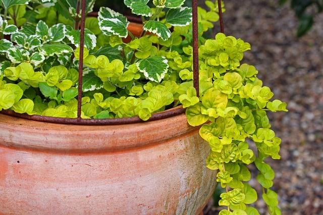 2 Avoid terracotta pots