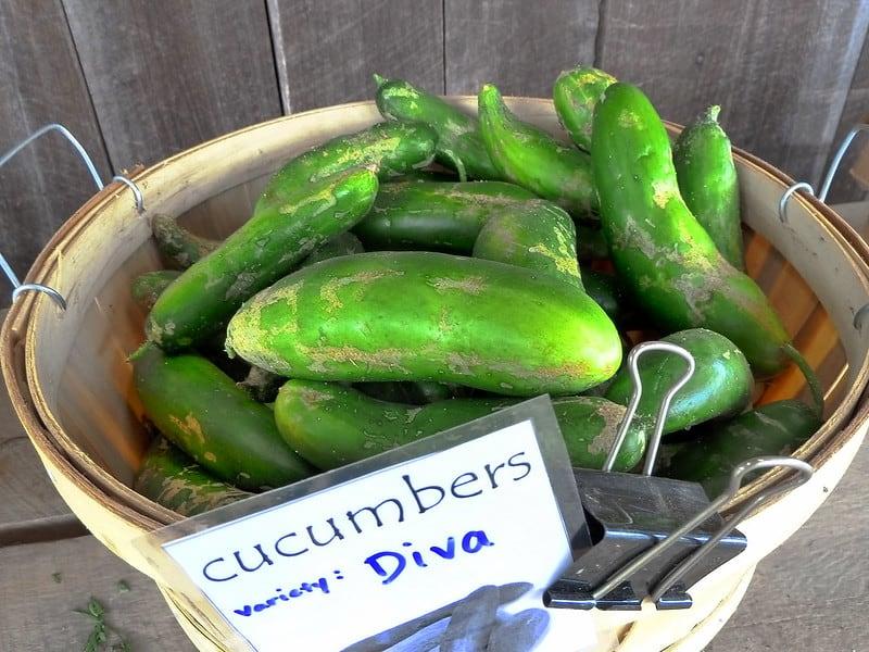 2 Diva Cucumbers 1