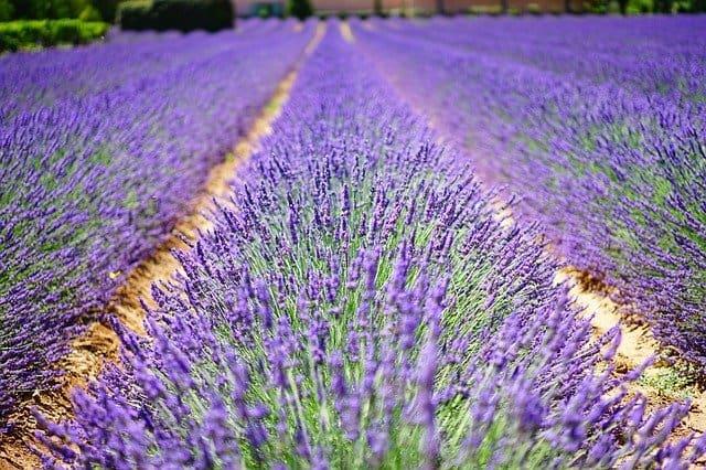 2 Lavender Garden