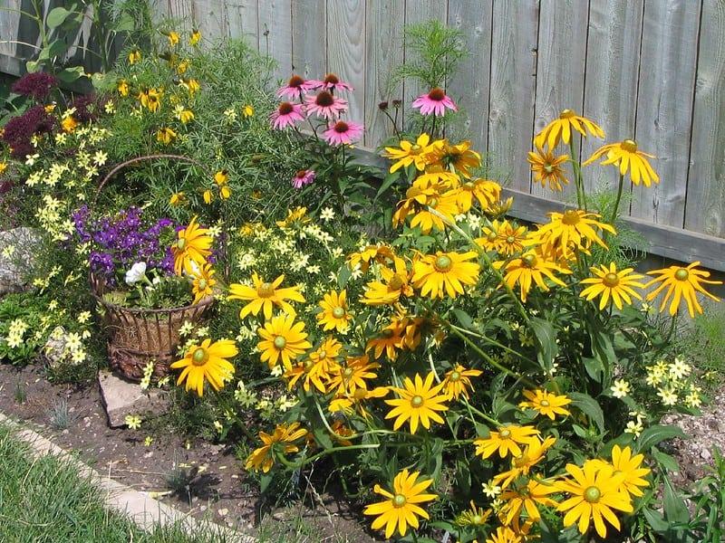 2 Perennials 1