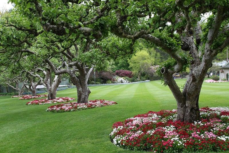 22 Flower Ringed Trees