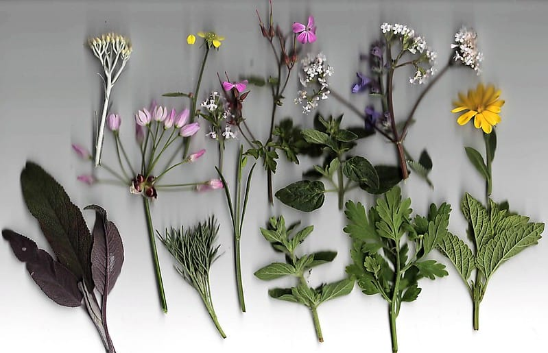23 Herbs
