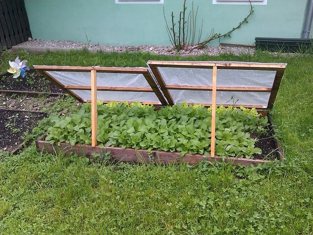 3 Cold frames are useful