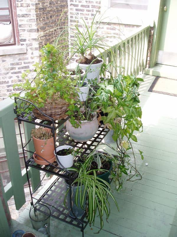 3 Plant Stand Types