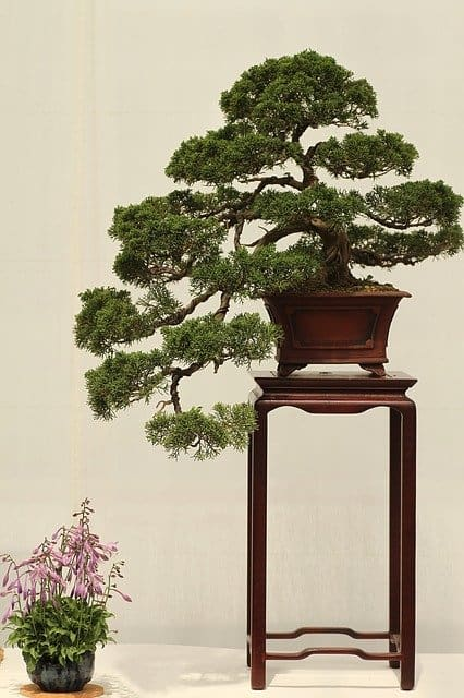 4 Grow in pots or as bonsai