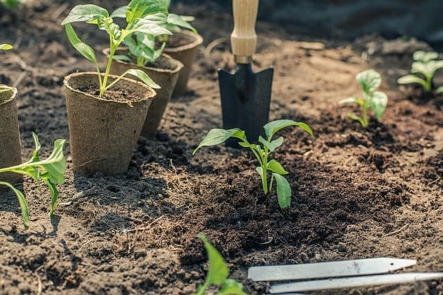 4 Prepare soil before planting