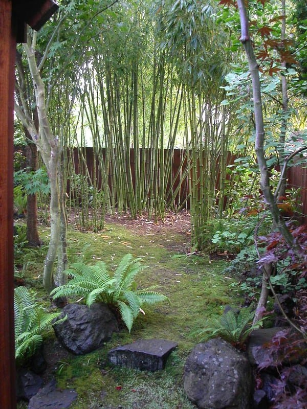 4 Spaced Bamboo